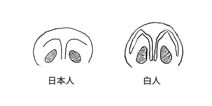 日本人と白人