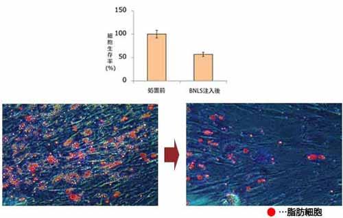 BNLS脂肪減少グラフ