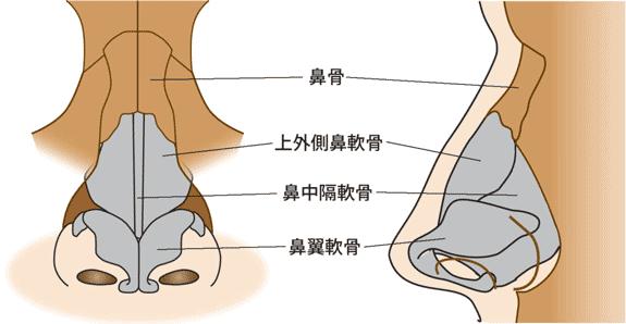 鼻解剖 鼻骨