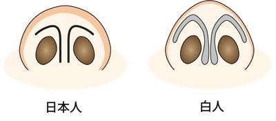 日本人と白人の鼻