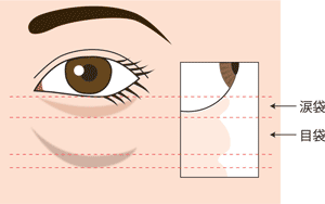 目の下の断面図(涙袋)