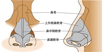 鼻の骨・軟骨 鼻整形