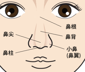 鼻名称(正面)