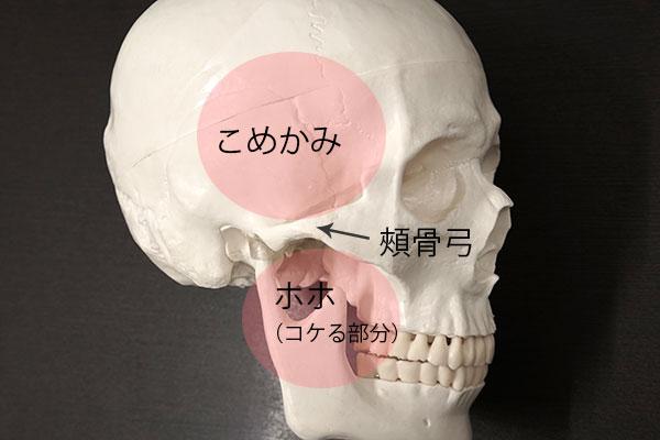 こめかみ・ホホの骨格