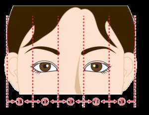 目の幅の等分の図