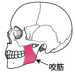 頭蓋骨横 エラの悩み 咬筋