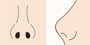 鼻先が上を向いている人のイメージ