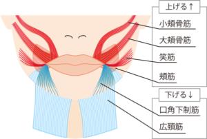 口角ボトックスのイメージ