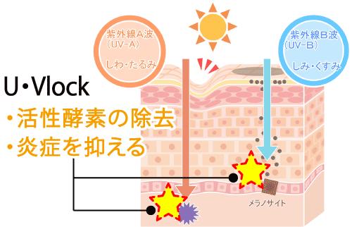U・Vlock飲む日焼け止めの効果